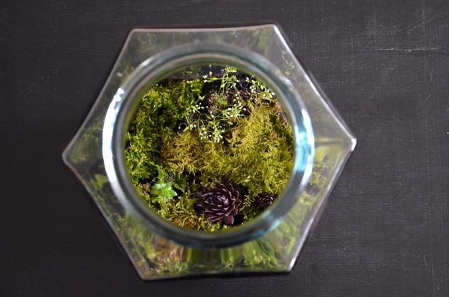 plante terrarium