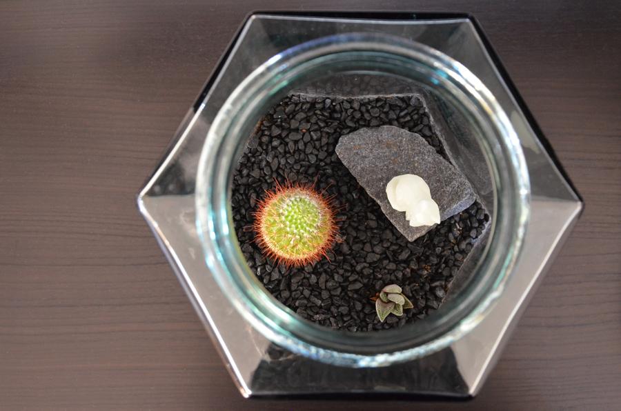 3D print plante terrarium